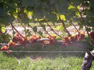 winery94.jpg