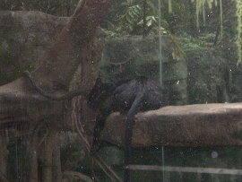 Feb-Zoo 4.jpg