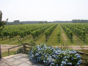 Winery11.jpg