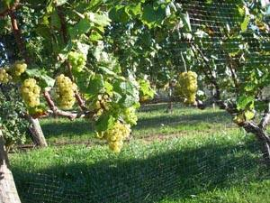 winery12.jpg