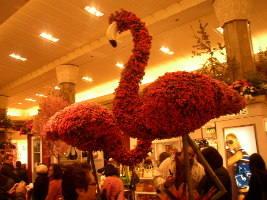 flower show 004.jpg